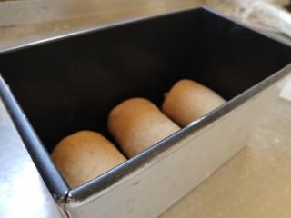 全麦红糖吐司,平均摆在土司盒中,放在温暖的地方发酵