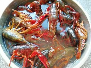 爆炒咖喱小龙虾,小龙虾买回来先用水养上一个小时左右,吐一吐脏东西。