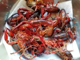 爆炒咖喱小龙虾,盆里放上几张厨房用纸,放入清洗干净的小龙虾吸去多余的水分。