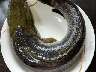 酸菜鱼,黑鱼杀好去肠去腮去鳞并清洗干净