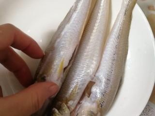 沙丁鱼粥,鱼洗干净(买鱼要看眼睛,要选眼睛亮)