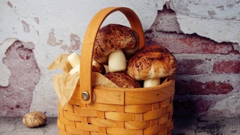 象形豆沙蘑菇包