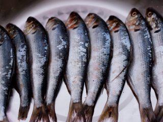 干炸海鲫鱼,首先把鱼放到盘子里。