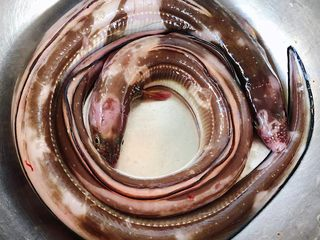 红烧海鳗,老公自己海钓的鲜活海鳗超级新鲜