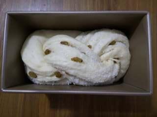 好吃又好看的椰蓉葡萄干吐司,这是发酵好的面包坯,白白胖胖的,很诱人哟。