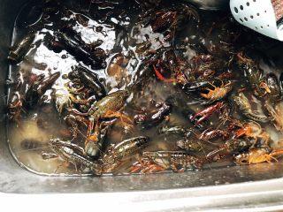 十三香小龙虾,小龙虾在水里清洗干净