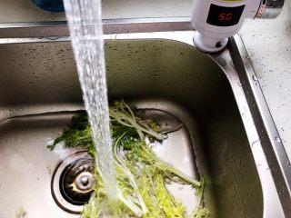 夏日清爽大拌菜,苦菊洗净(最好用饮用水,我这里用的是温水,因为我家水龙头是即热型的)
