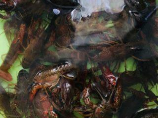 蒜蓉小龙虾,小龙虾买回来用清水浸泡二小时,让它吐出脏东西。