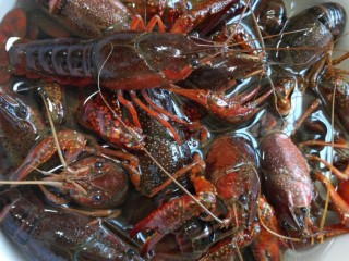 蒜泥小龙虾,龙虾泡水泡出杂质