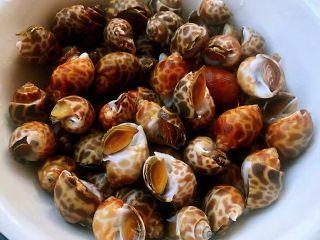 香辣花螺,花螺是南方的美味在北方很难见到今天遇到新鲜的花螺就果断买回来准备把好吃的做起来花螺洗净备用
