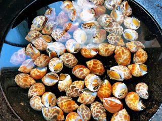 香辣花螺,锅中添加适量清水放入洗净的花螺大火煮起来