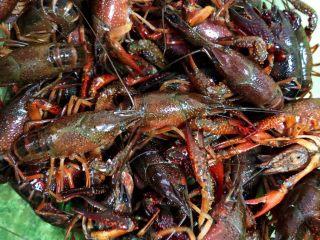 麻辣小龙虾,农贸市场买来的鲜活小龙虾