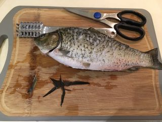 红烧鲫鱼,鲫鱼洗净,确认鳞片干净后修剪鳍