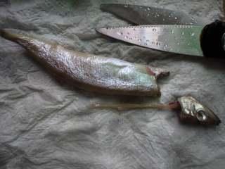 香煎多春鱼,然后轻轻把鱼头和里面的肠子一起抽出,不要破开鱼肚,因为鱼籽都在肚子里面,破开肚子鱼籽就会漏出来了。