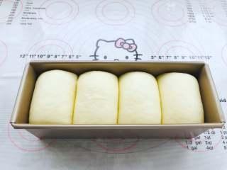 中种奶油吐司,吐司面团的体积涨至模具的8分满出即可。