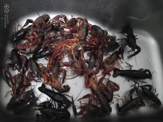 美味小龙虾,小龙虾放进洗碗池里。