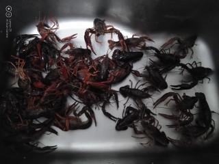 美味小龙虾,用牙刷把小龙虾刷干净,再洗2遍。