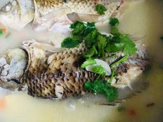 鲫鱼汤,撒上香菜叶即可出锅