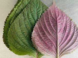 南瓜糯米苏耗子,这就是我们这里,这个季节才有的紫苏叶。