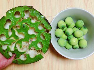 鲜荷叶百合莲子粥(清热解暑),将莲子从莲蓬中取出来。
