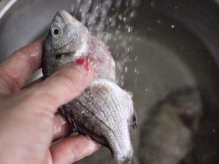 海浮鱼冬瓜冻豆腐煲,海浮鱼去除内脏后,用自来水反复冲洗干净。