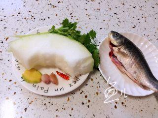 冬瓜鲫鱼汤,准备食材,鲫鱼去鳞去腮去内脏