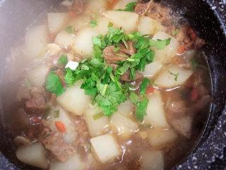 萝卜牛腩煲,关火,撒上香菜末。
