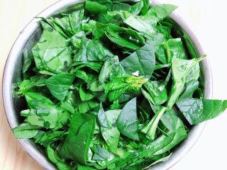 芙蓉鲜蔬汤,菠菜切段儿待用。