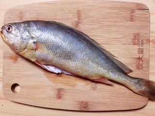 酱焖黄花鱼,准备好黄花鱼一条。