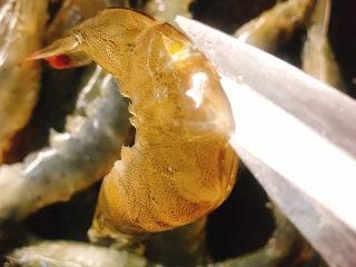 花开富贵椒盐虾,开背去虾线