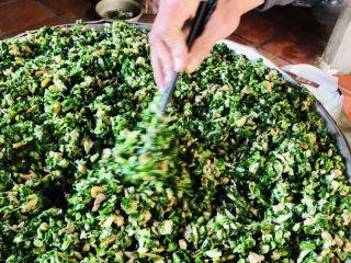 客家小吃:蒜苗粿(葫粄)➕菜头粄,快速盛起,散开,开风扇,边翻拌边吹凉,防止蒜苗变黄。