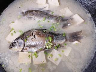 奶白鲫鱼豆腐汤,汤炖至浓稠撒上蒜苗叶关火