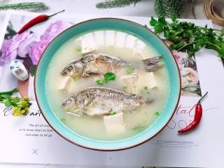 奶白鲫鱼豆腐汤,盛入容器放入适量香菜,一道美味又营养的奶白鲫鱼豆腐汤就完成了。