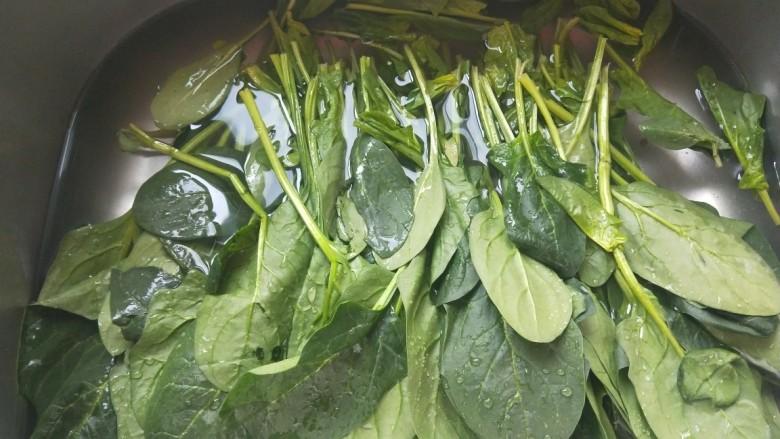 凉拌菠菜粉丝,去掉根部泡水洗干净。