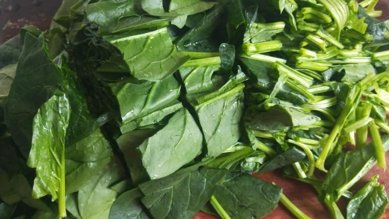凉拌菠菜粉丝,菠菜切成段。