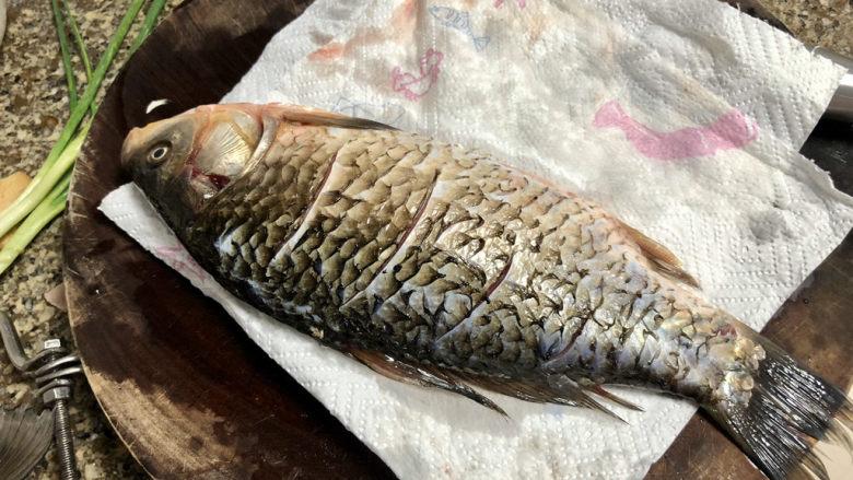 奶白鲫鱼豆腐汤➕朝看白水暮青山,腌好的🐟,用厨房纸巾吸去表面水分