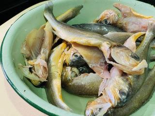 红烧小黄鱼,将小黄鱼洗净,内脏也挖干净,特别注意黑膜和鱼鳃要清洗干净;