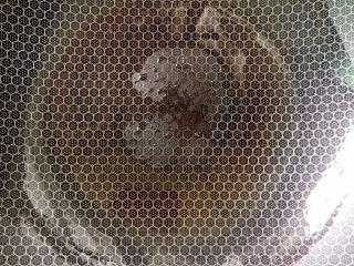 白玉菇炒雞蛋,熱鍋冷油