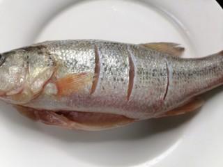 蔥油鱸魚,背上劃上幾道這樣可以更入味