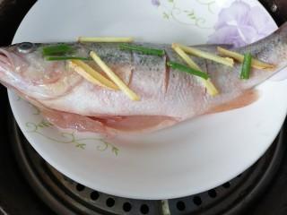 蔥油鱸魚,放入蒸鍋蒸