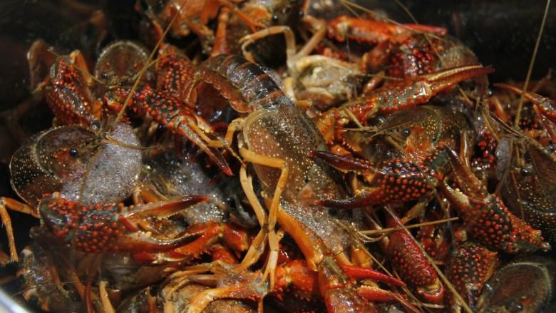清蒸小龙虾,用新牙刷沾少许的盐,将虾刷干净
