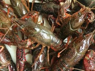 美味宵夜小龙虾,给小龙虾洗刷刷