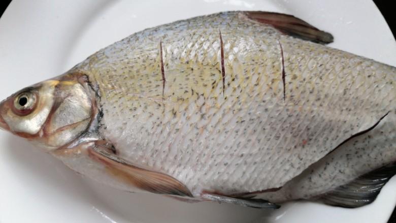 红烧鳊鱼,在鱼背上划上几道以便更入味