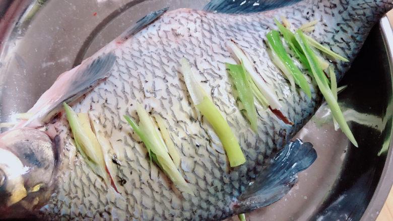 葱油鳊鱼,在鱼身和鱼肚子里放入葱姜。