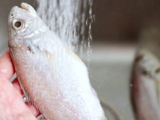 风味烧烤鱼,把鱼去除内脏后,用自来水冲洗干净。