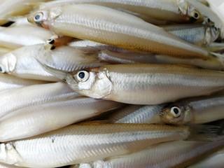 香炸胡瓜鱼,大鱼吃小鱼,肉质细嫩,脂肪含量高。