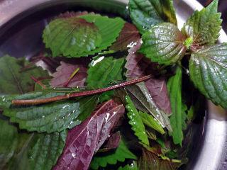 红烧鱼块,紫苏冲洗干净