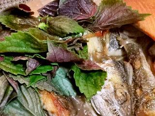 红烧鱼块,加入紫苏