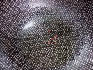 番茄炒莴笋,锅中倒入油,加热至五成热,放入花椒粒爆香。