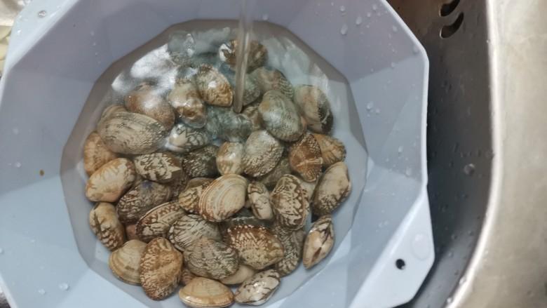花蛤丝瓜汤,花蛤泡好后再次清洗干净
